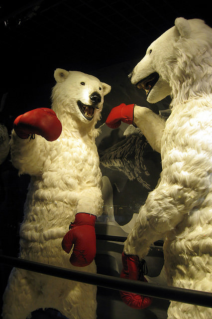 Boxing Polar Bears