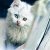 Alley Kitten