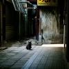路地裏 黒猫
