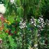 花盛りの庭
