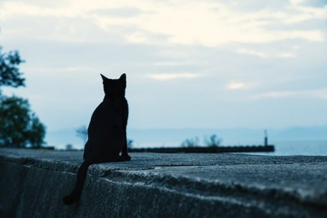 埠頭から海を黒猫