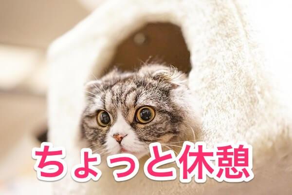 ちょっと休憩猫